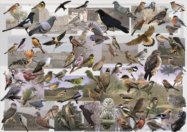 много разных птиц