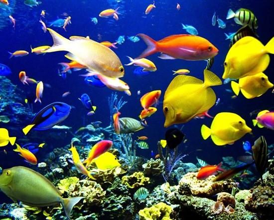 разные красивые рыбки фото