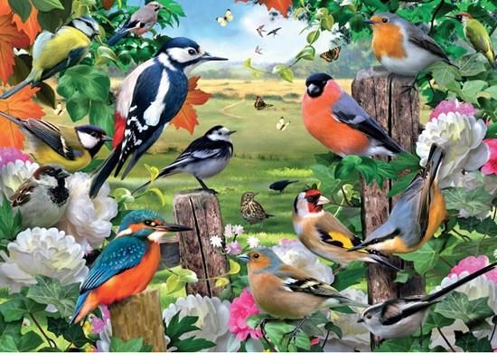 разные птицы картинка