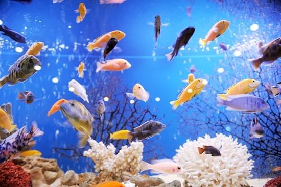 разные рыбки в аквариуме