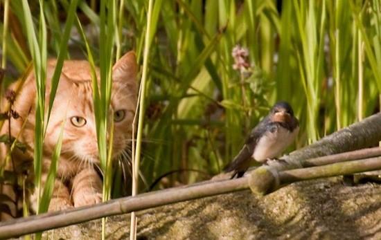Воробей и кот (М. Петров) » Стихи про птиц: читать красивые стихотворения  онлайн бесплатно