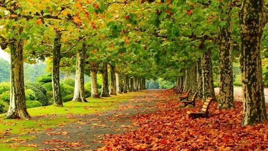 парк осень картина