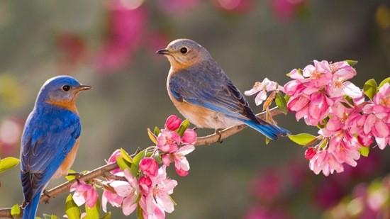 птички весна