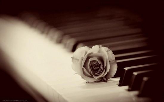 роза на рояли