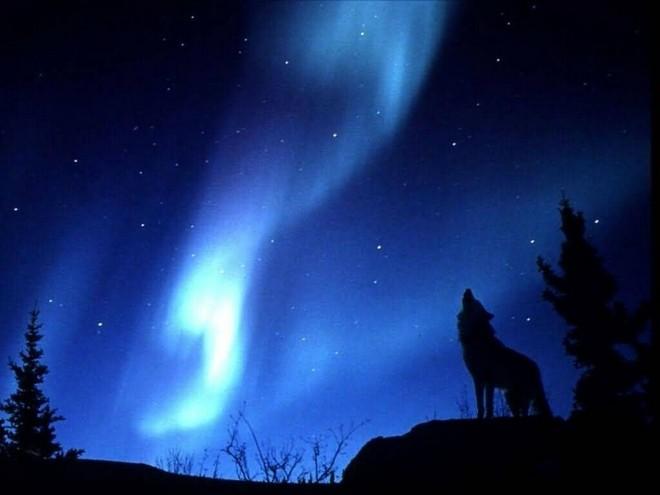 сияние волк